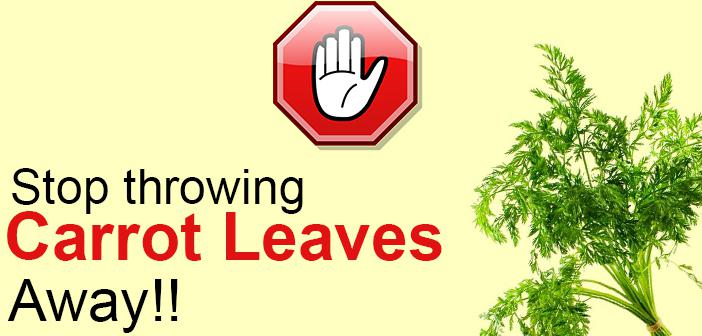 See Why You Ought to Save those Lose Carrot Leaves starting today